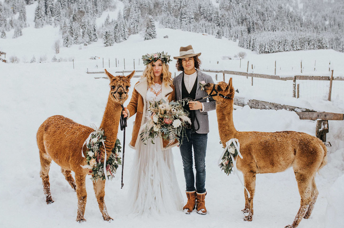 Winter White Wedding in the Mountains with a Twist… Alpacas!