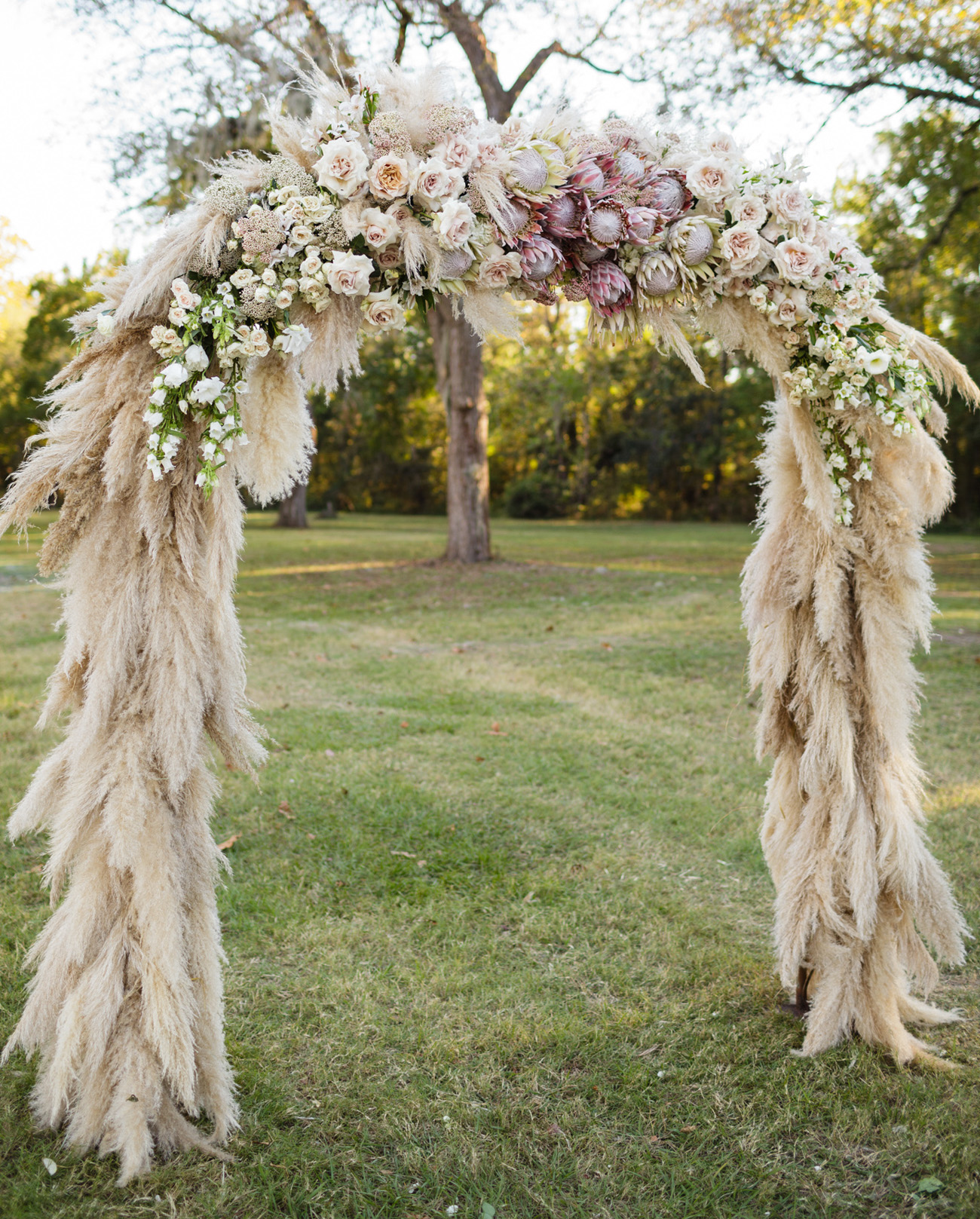 pampas grass and protea wedding ceremony arch