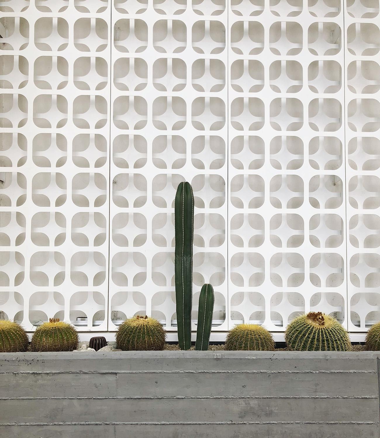 Palm Springs Cactus