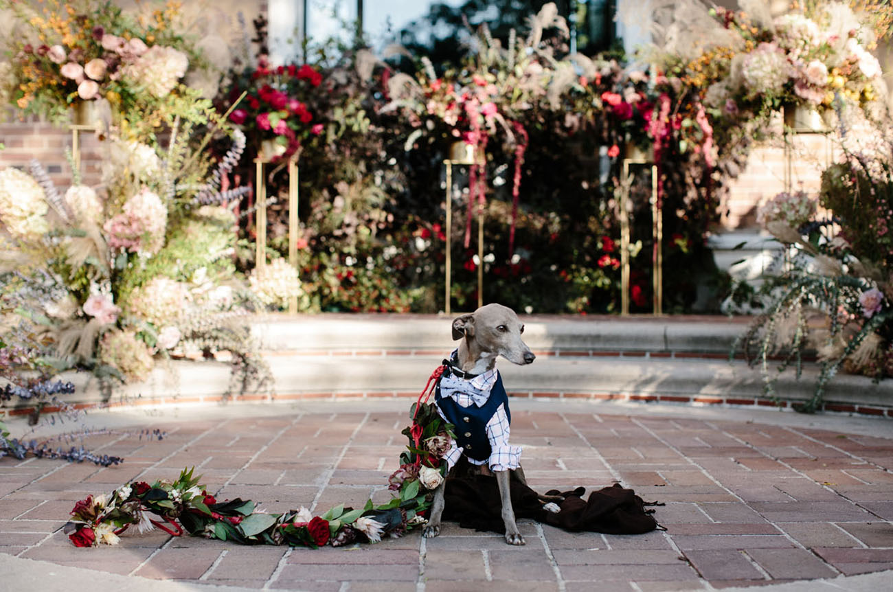 wedding dog with floral leash