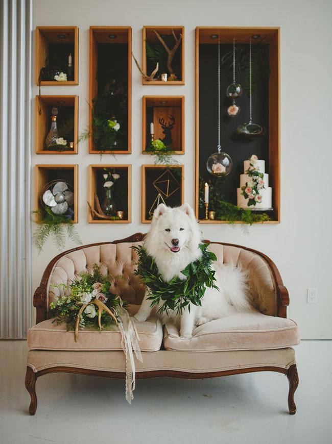 dog in a greenery collar