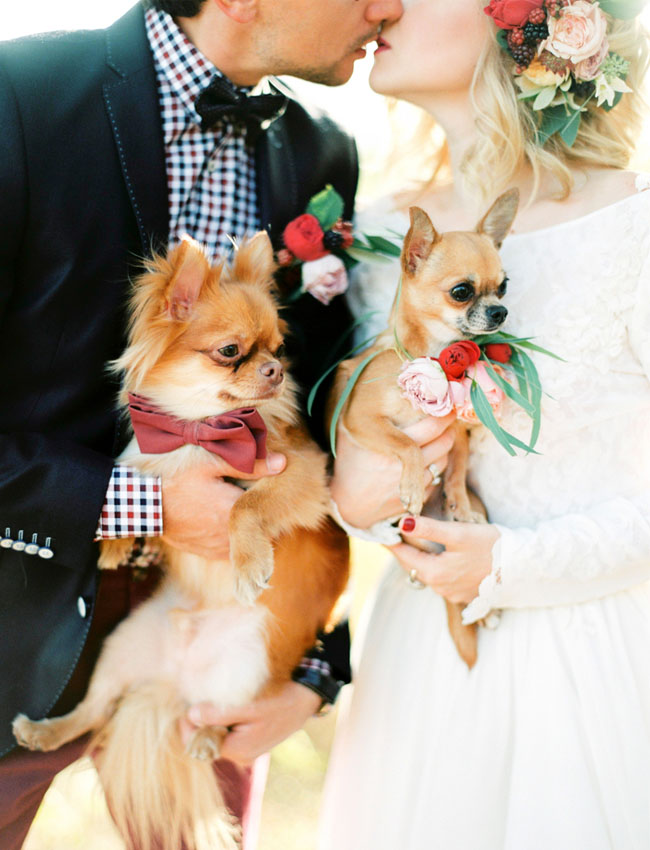 wedding dogs in bow tie and flowers