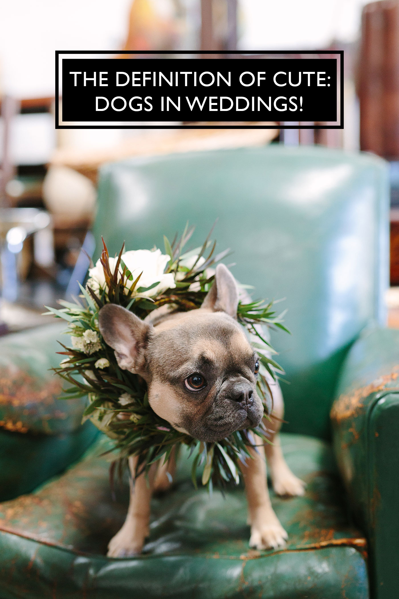 These dogs look cuter than us in weddings.