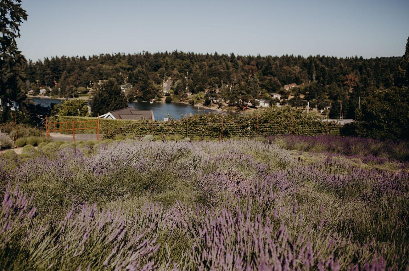 Lavender Farm Elopement