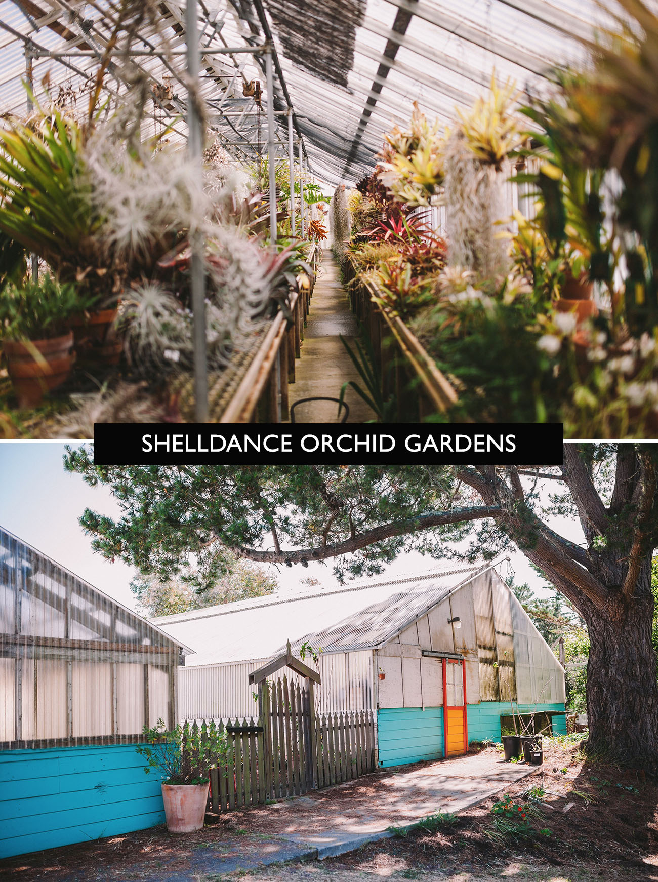 The Coolest Greenhouses To Get Married At In The United States