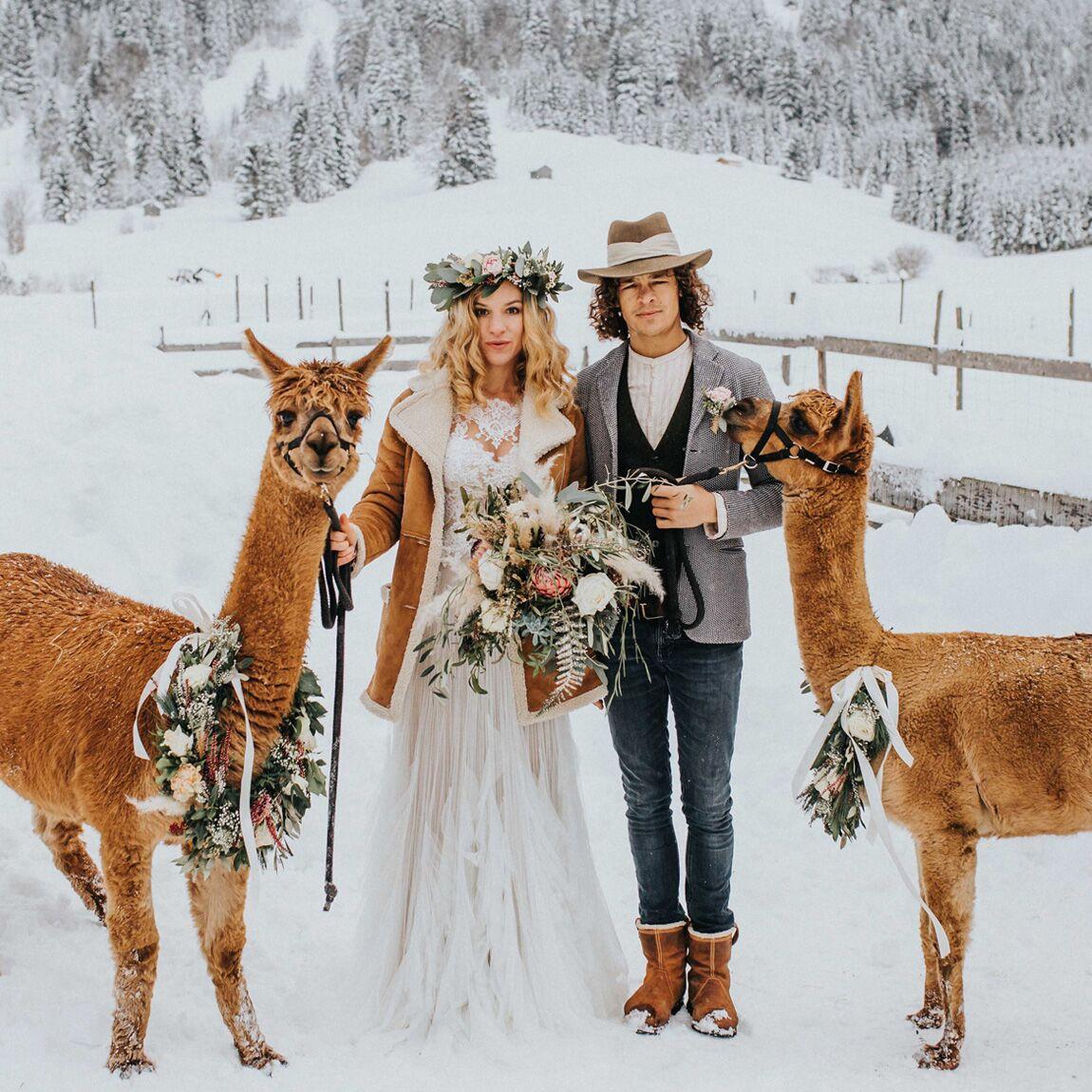 alpacas in the Austrian Alps wedding