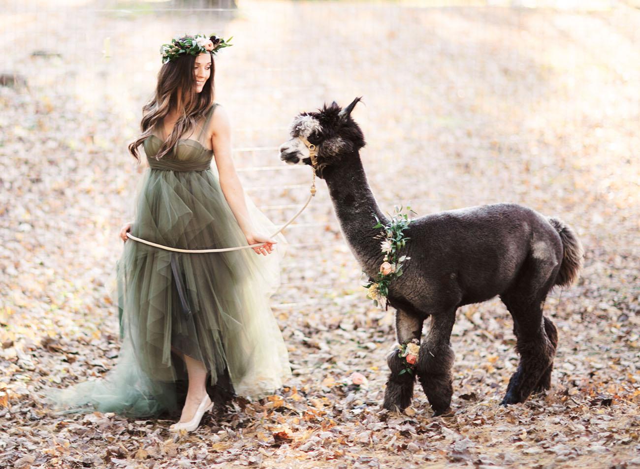 Earthy Alpaca Anniversary