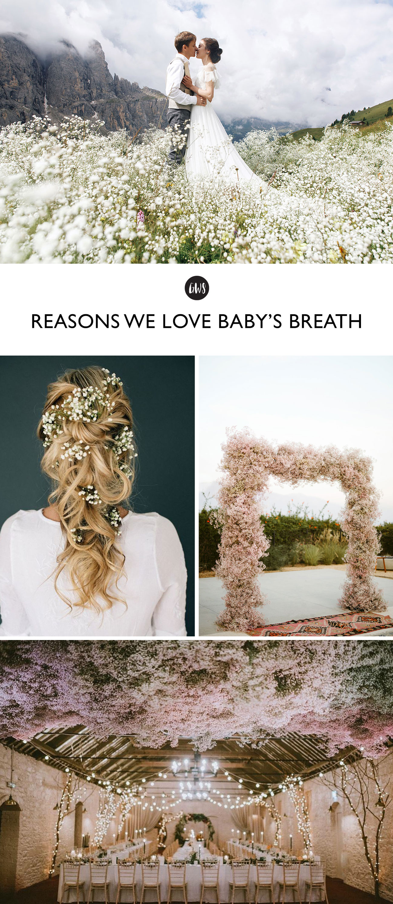Reasons we are loving baby's breath!