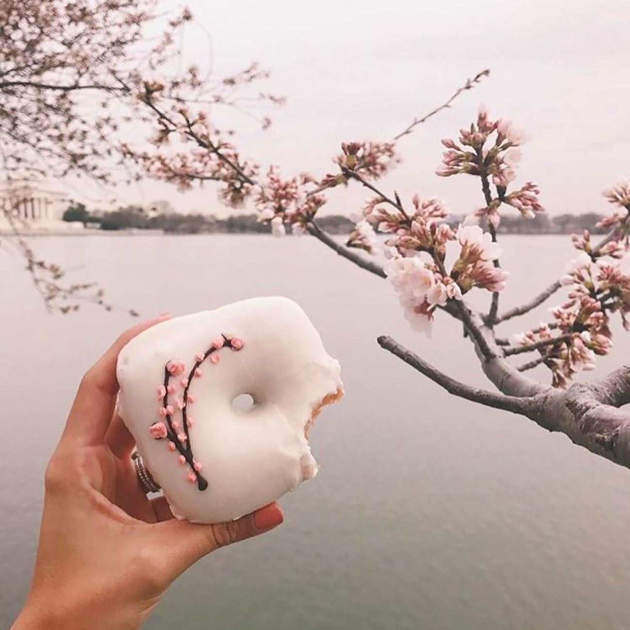 Cherry-Filled Donut from Astro Doughnuts Washington DC