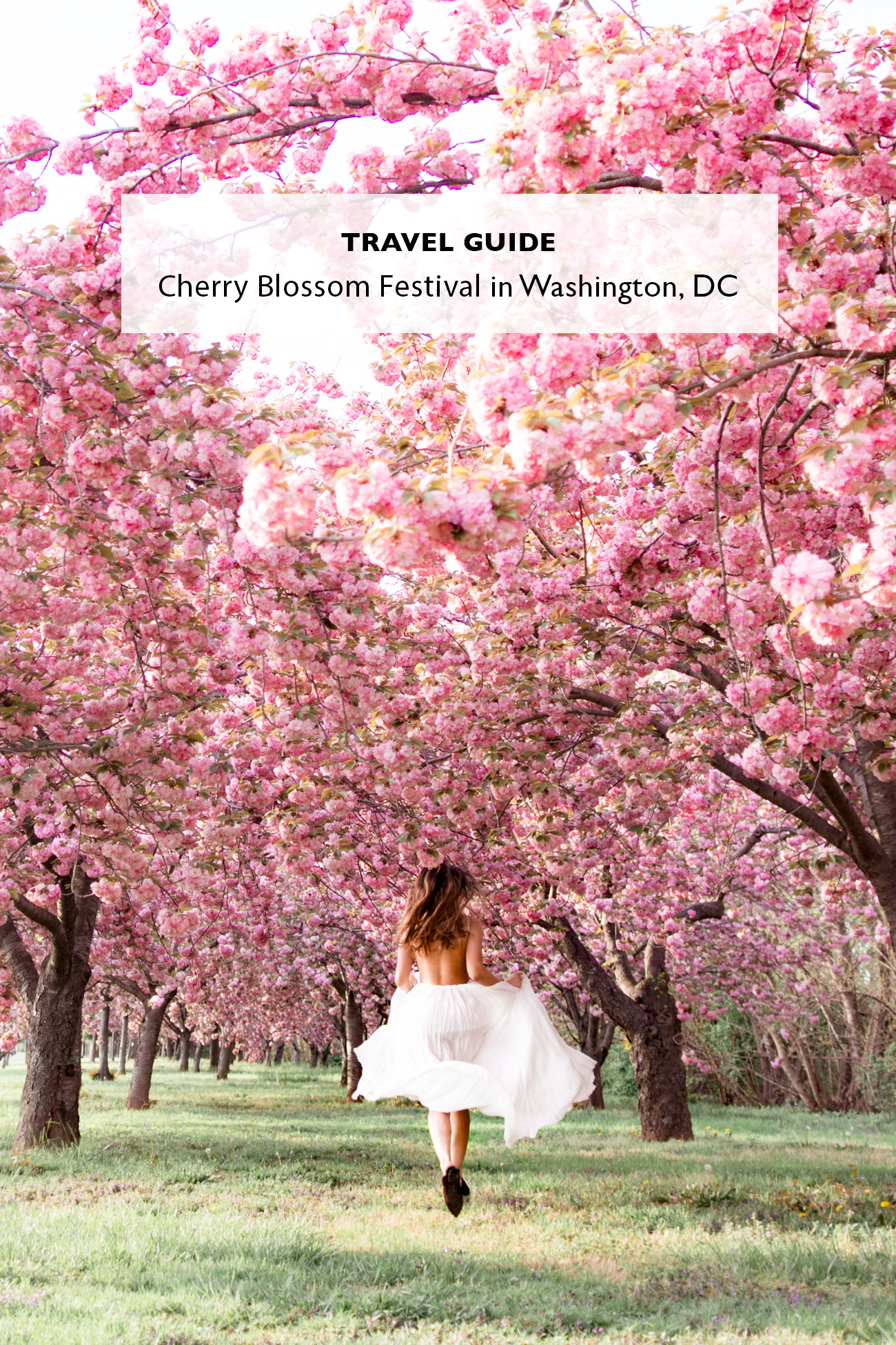 Travel Guide: Cherry Blossom Festival in Washington, D.C.