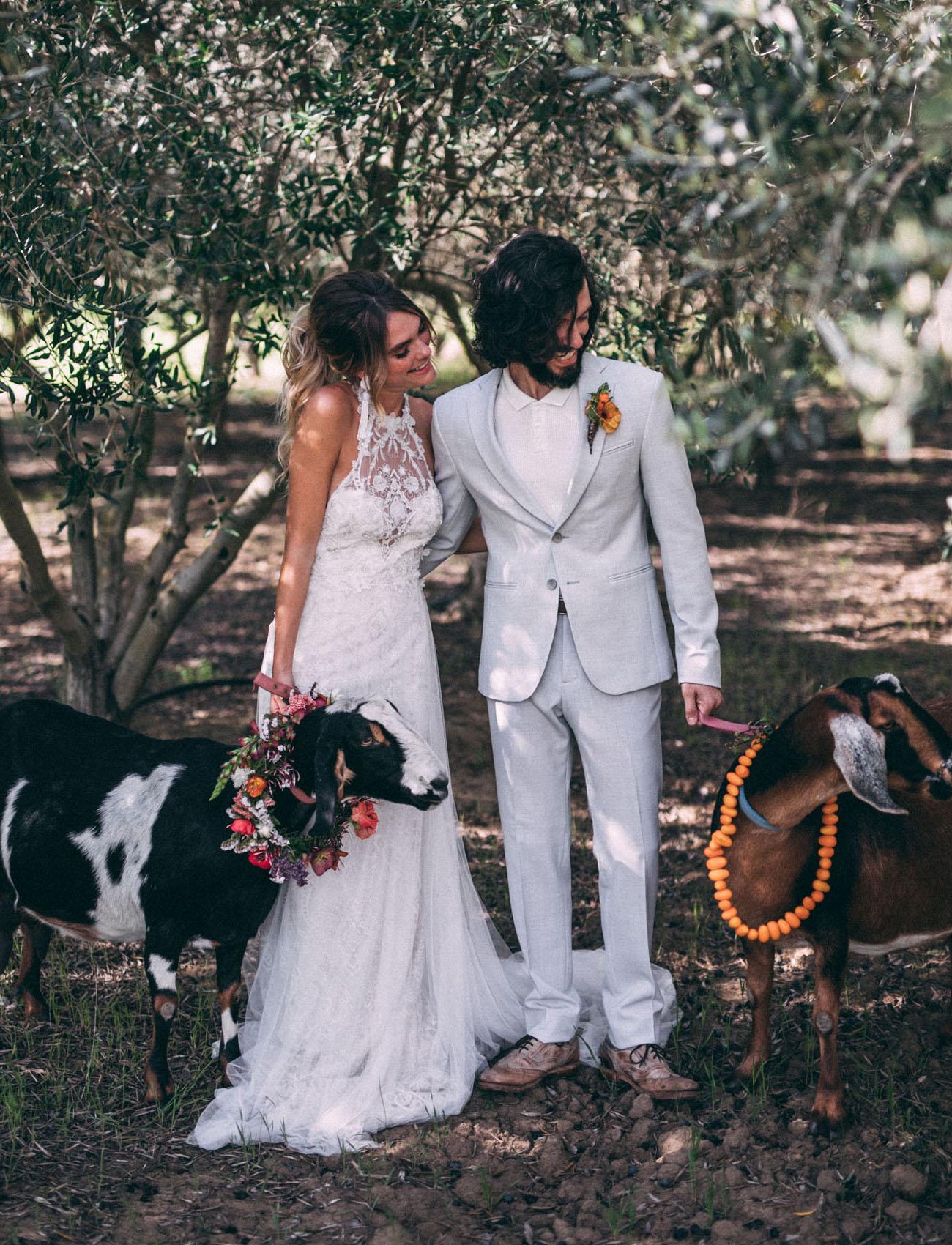 goats at a wedding