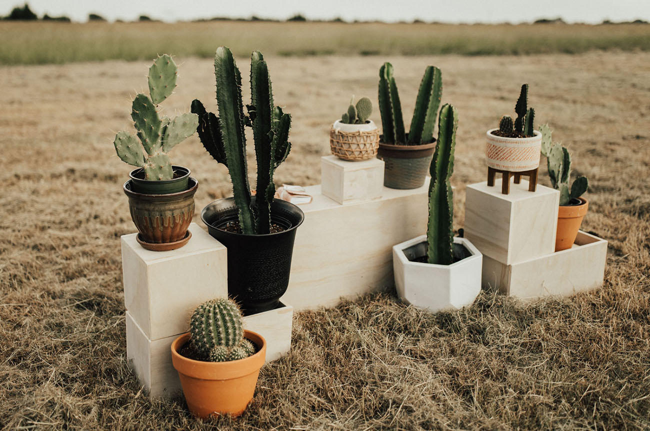 potted cactus ceremony