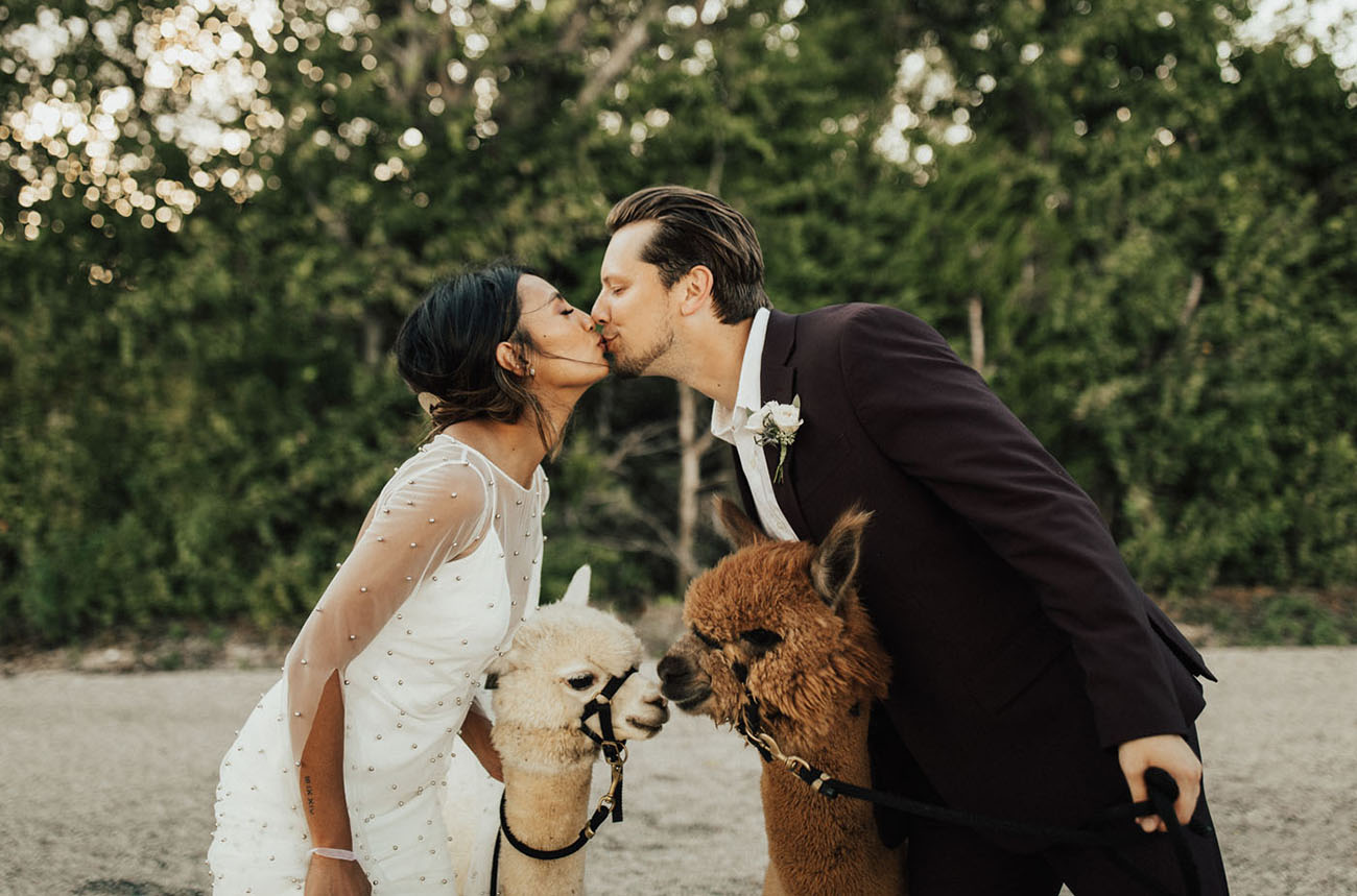 bride and groom with alpacas