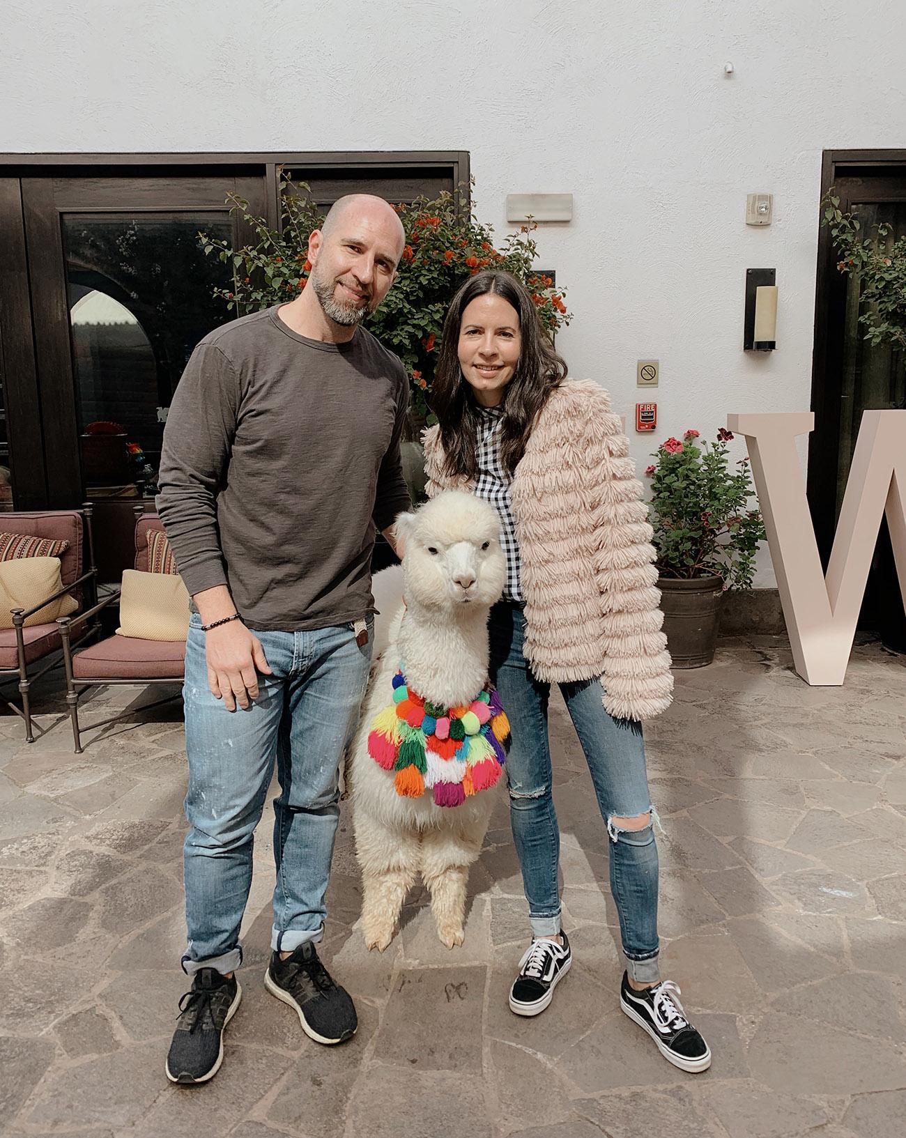 panchita alpaca at hotel in Peru