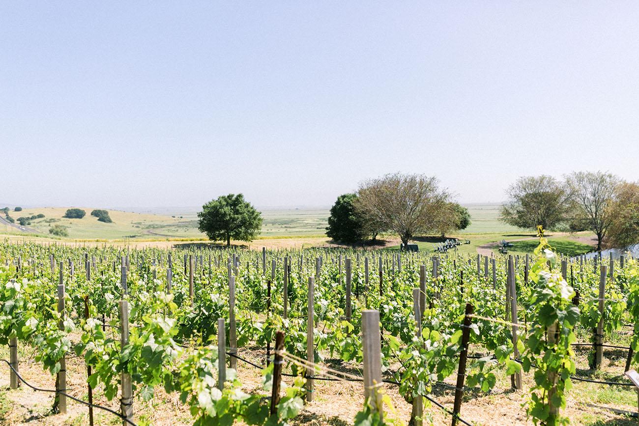 Ram Gate Winery Sonoma