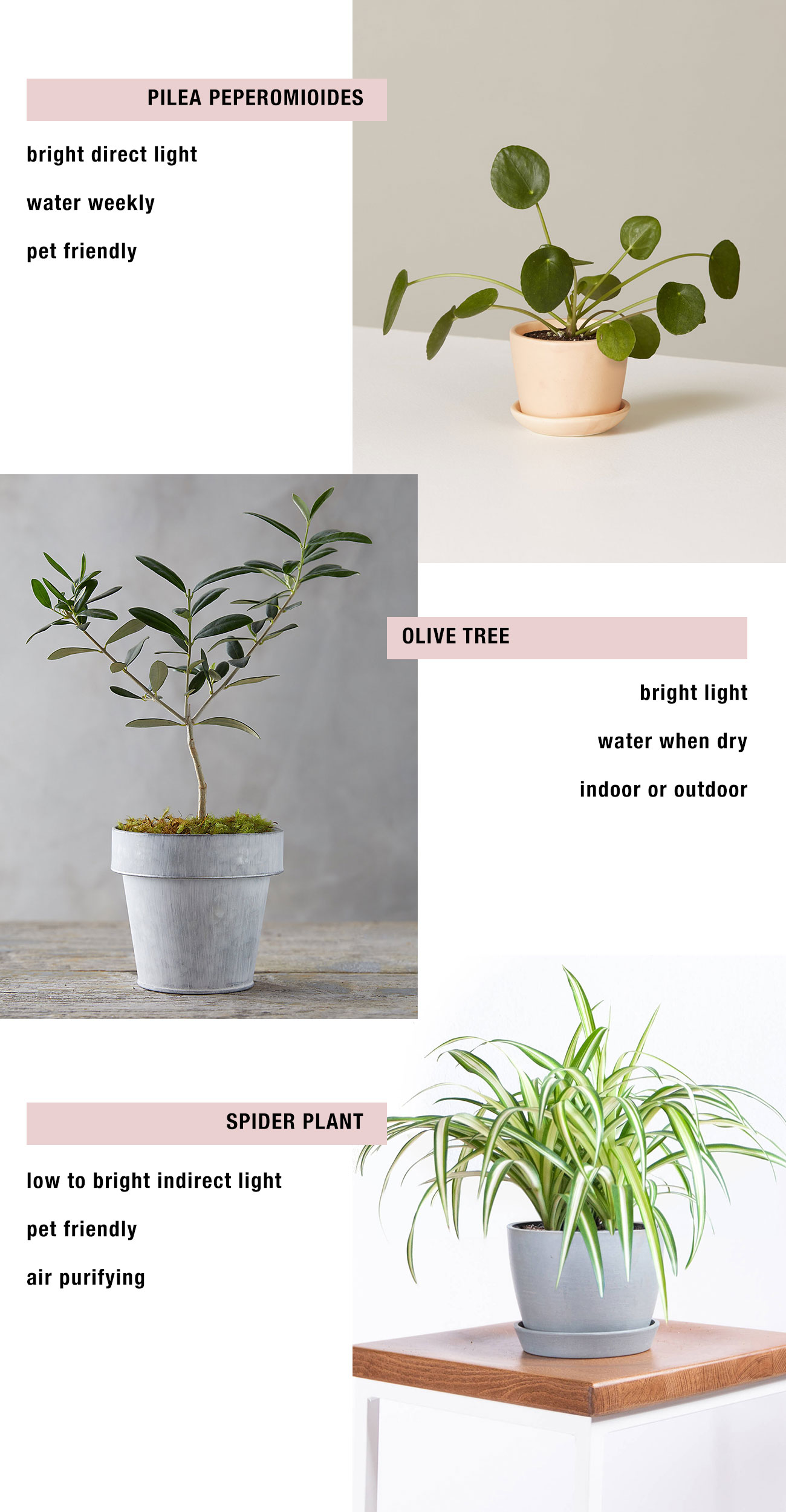 low maintenance plants wedding to home