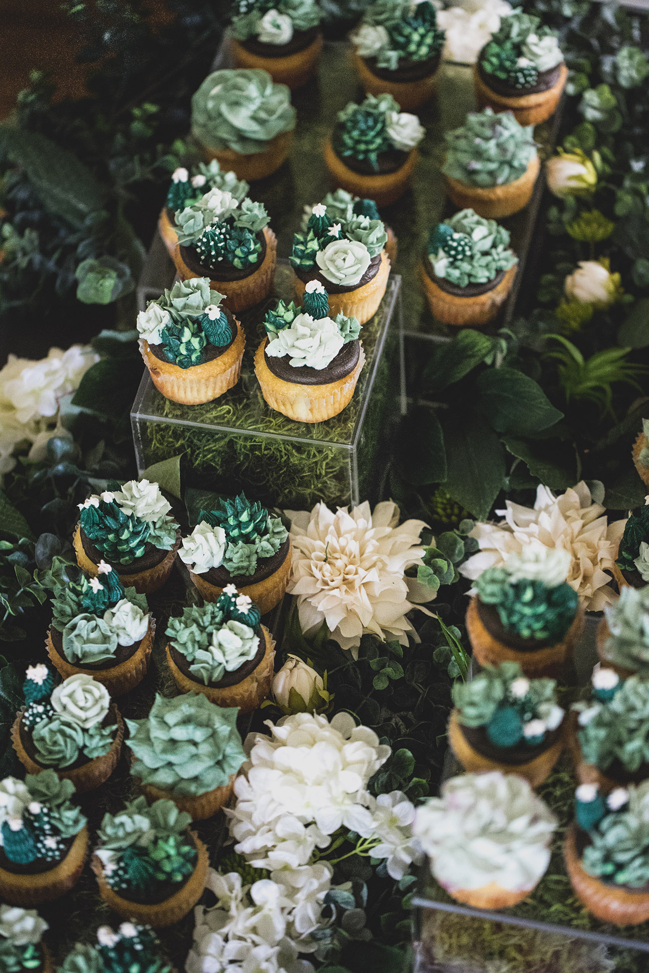succulent cupcakes by Bijou's Sweet Treats