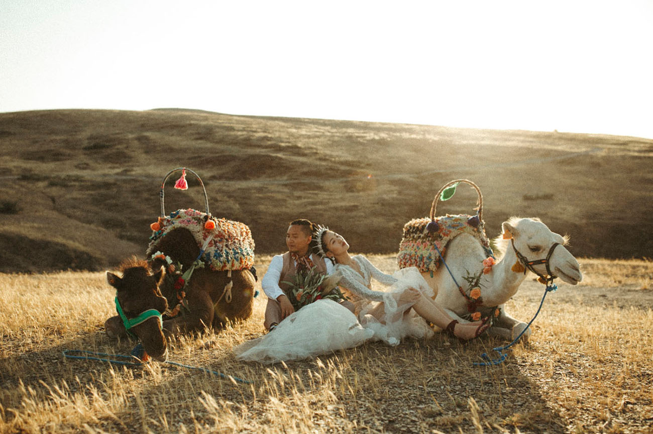 wedding camels