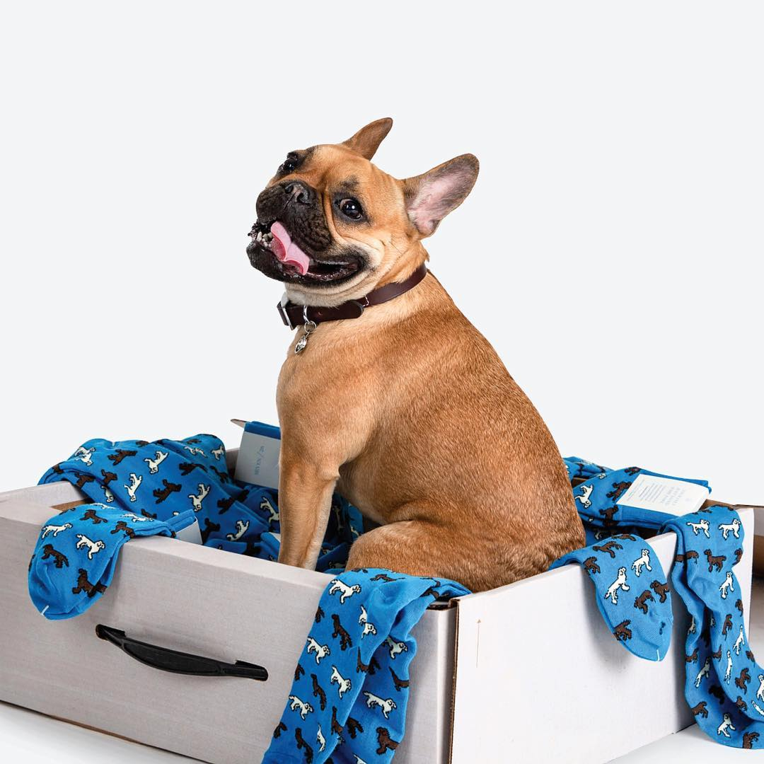 doggy socks for groom and groomsmen