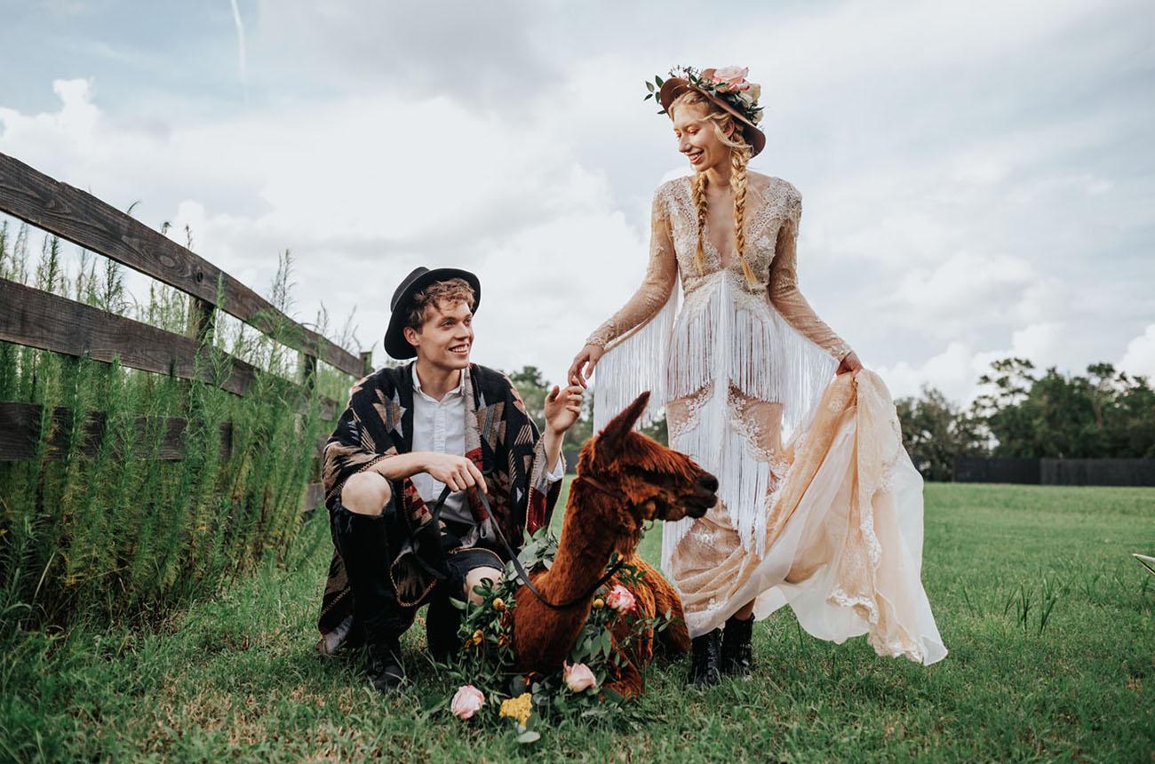 Alpaca Wedding Portraits