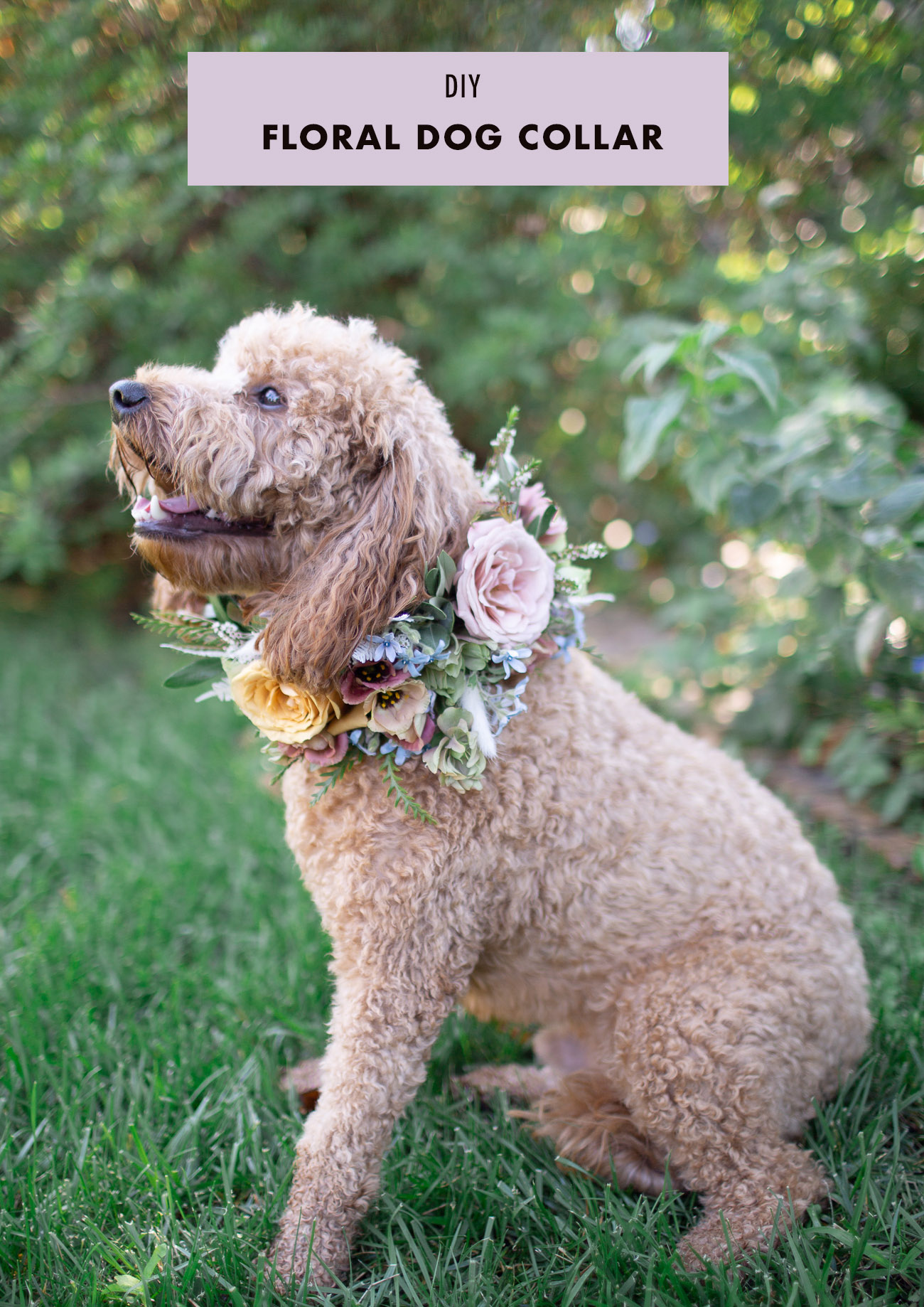 DIY Floral Dog Collar