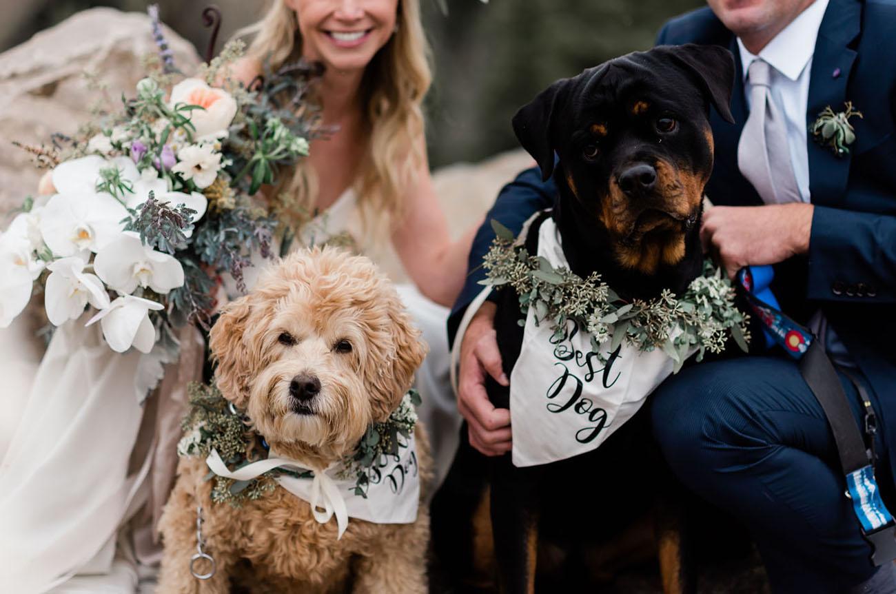 wedding pups