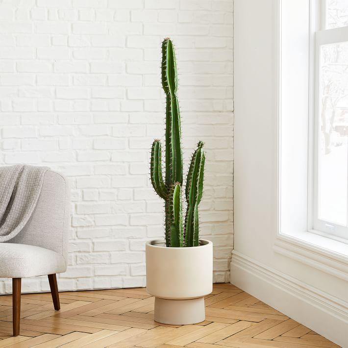 faux cactus plant