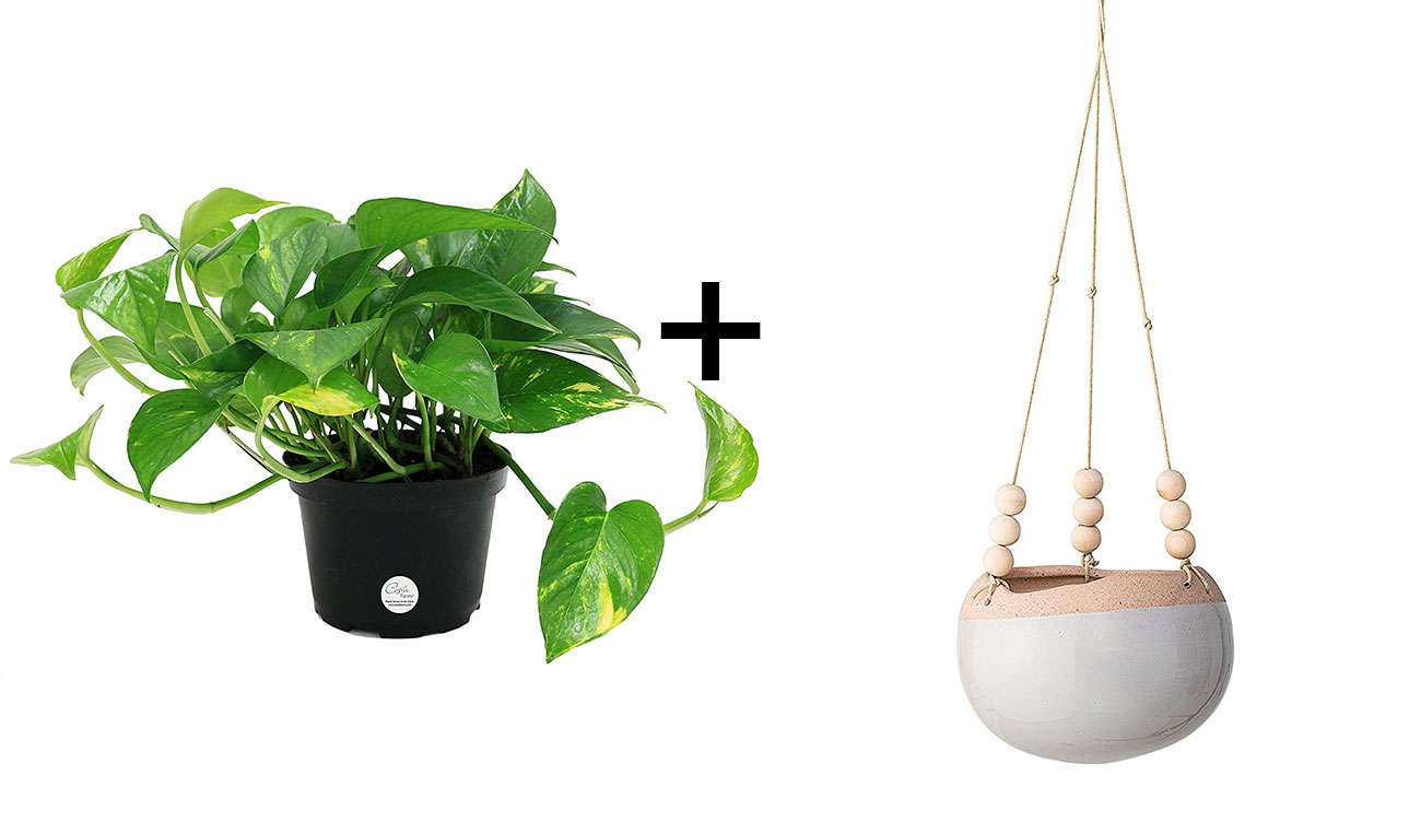 hanging plant and planter