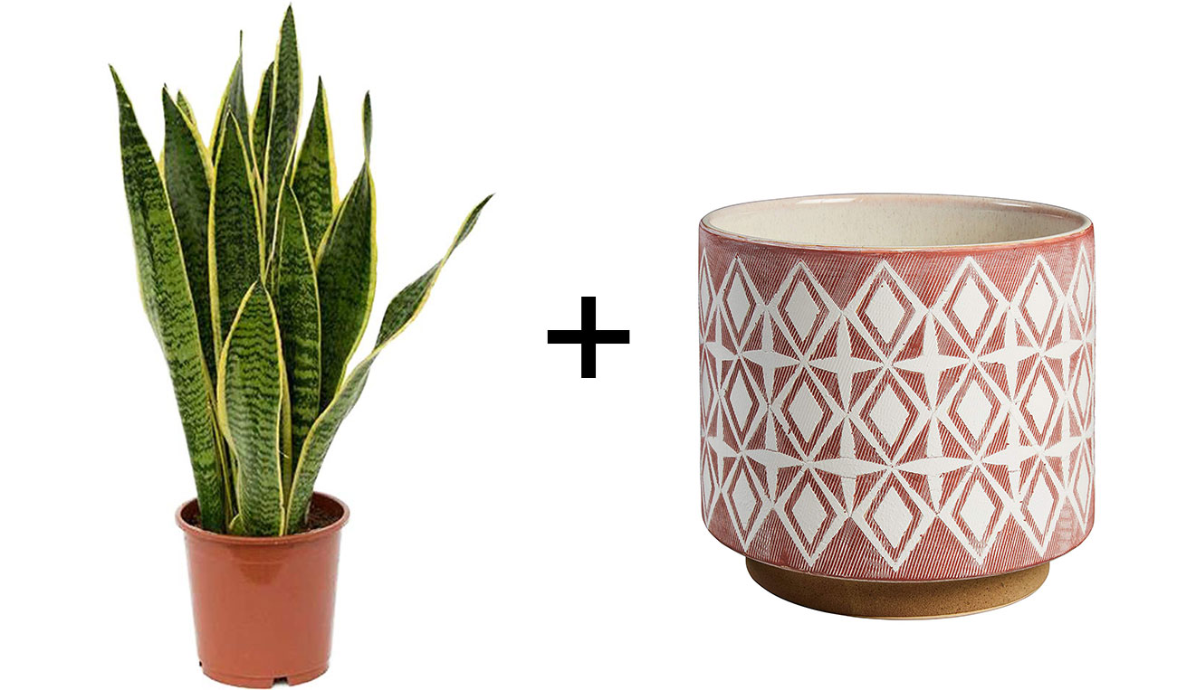 snake plant and mud cloth planter