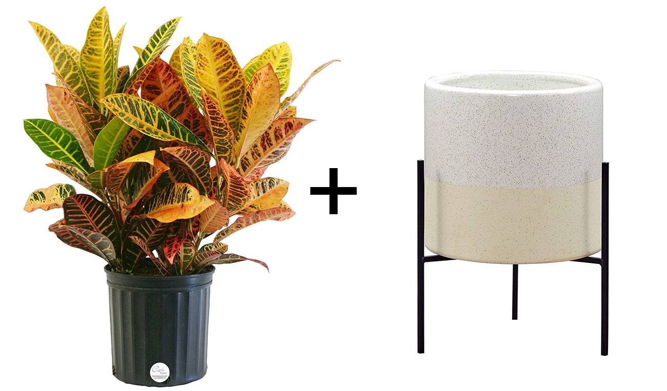 plant and mid-century planter
