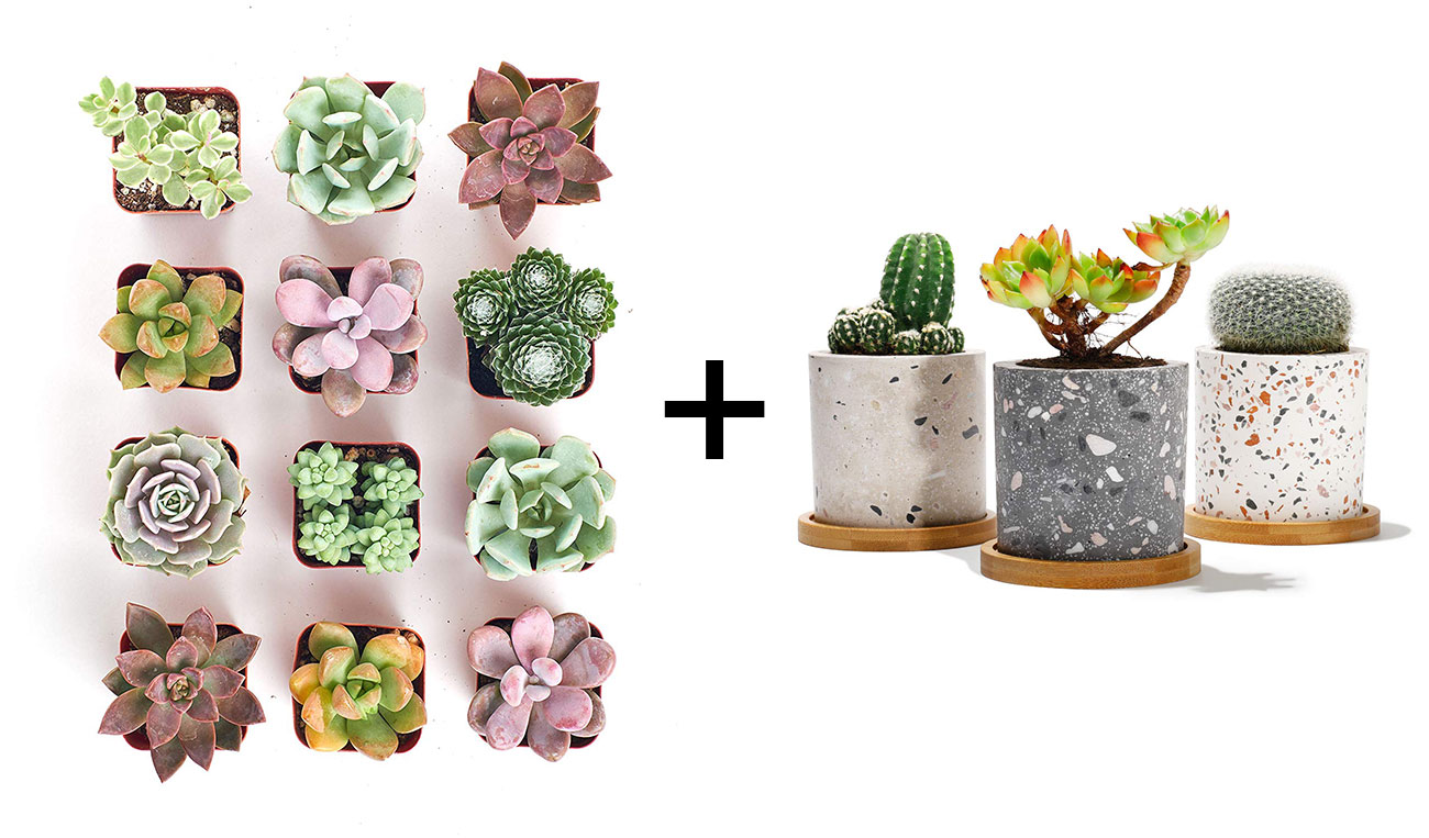 mini succulents and terrazzo planters