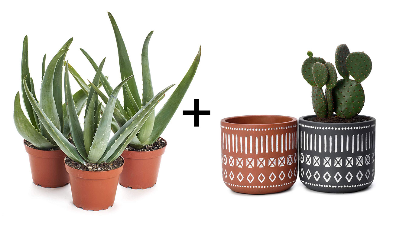 aloe plants and mud cloth planters