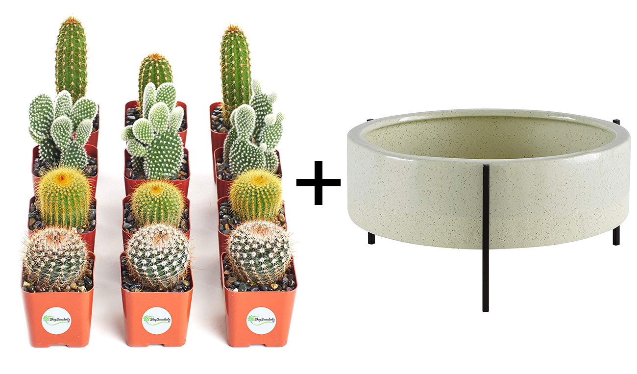 mini cacti and large planter