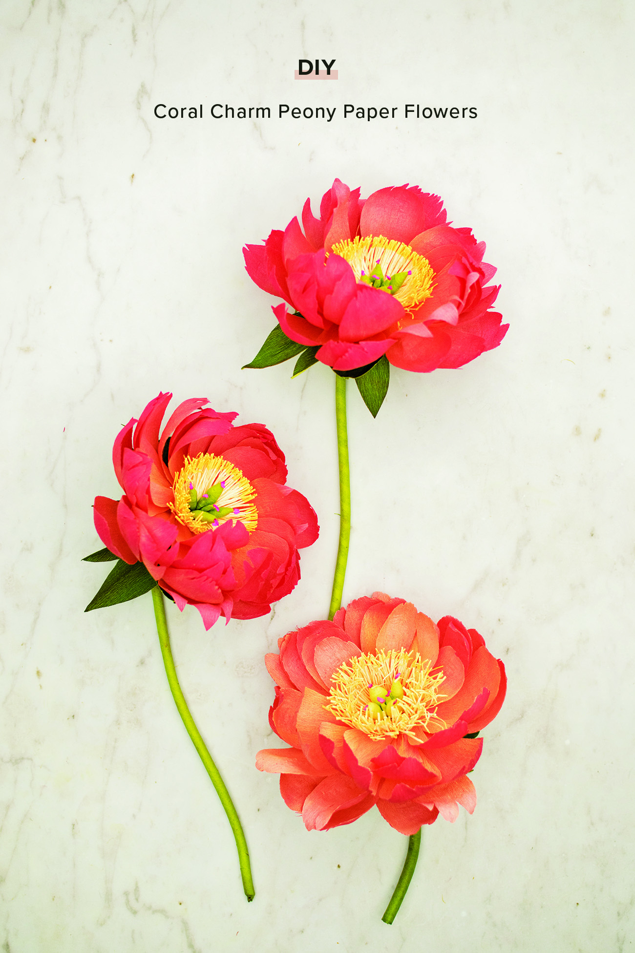 Coral Charm Peony Paper Flower DIY