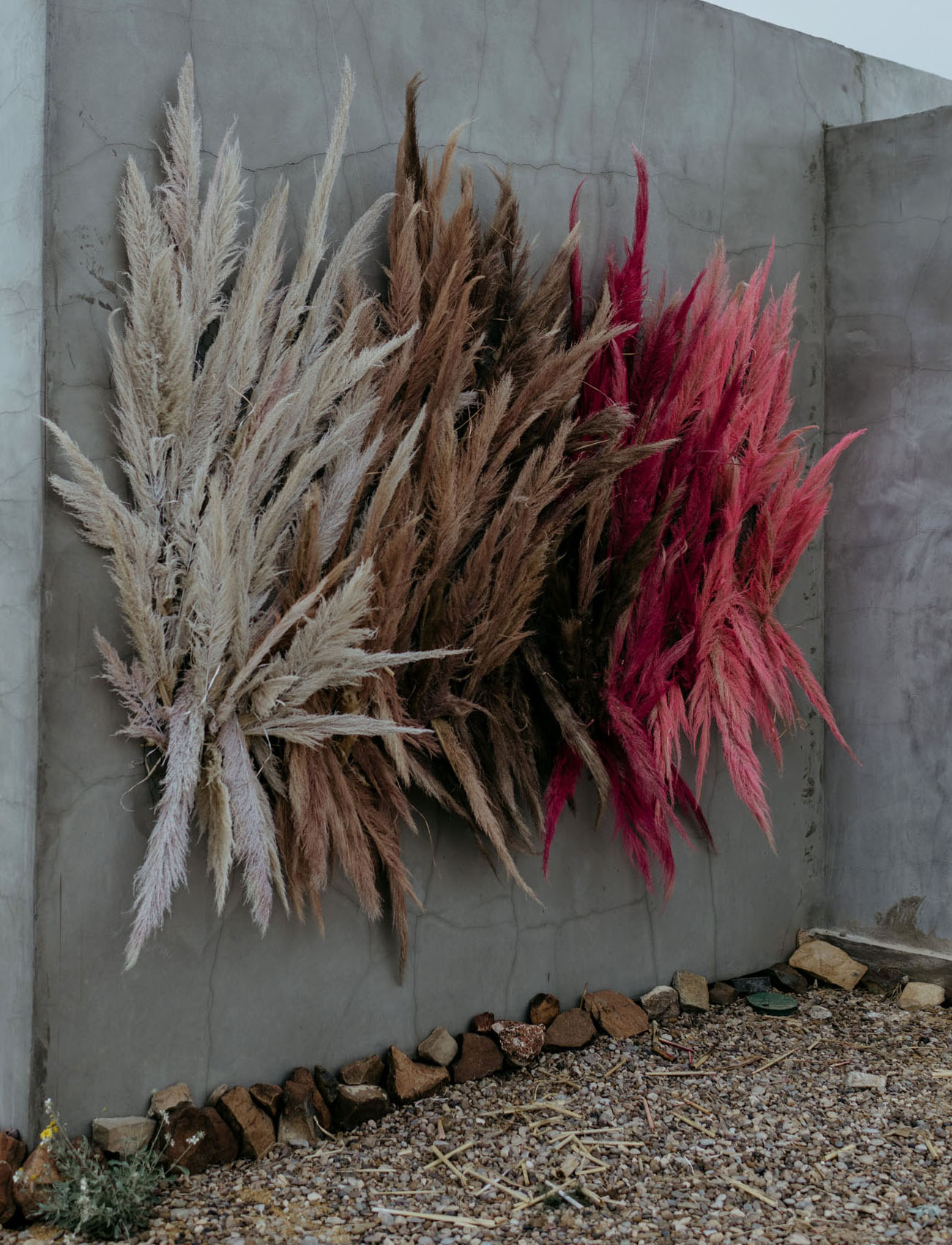 painted pampas grass