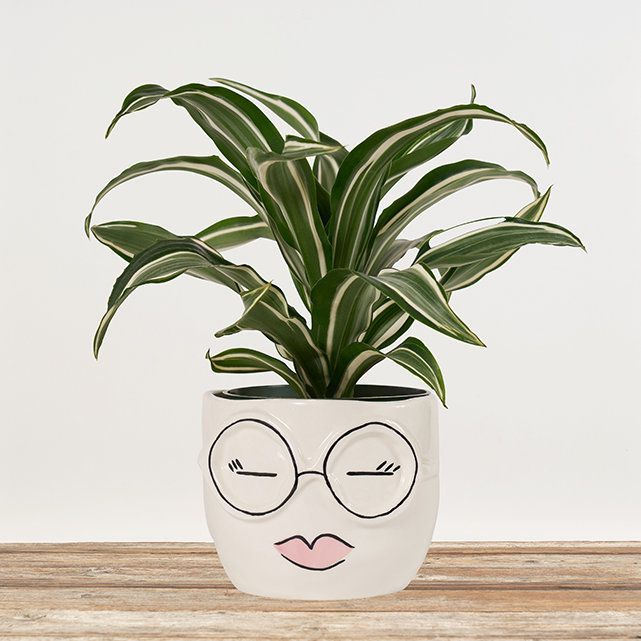 face pot for mothers day