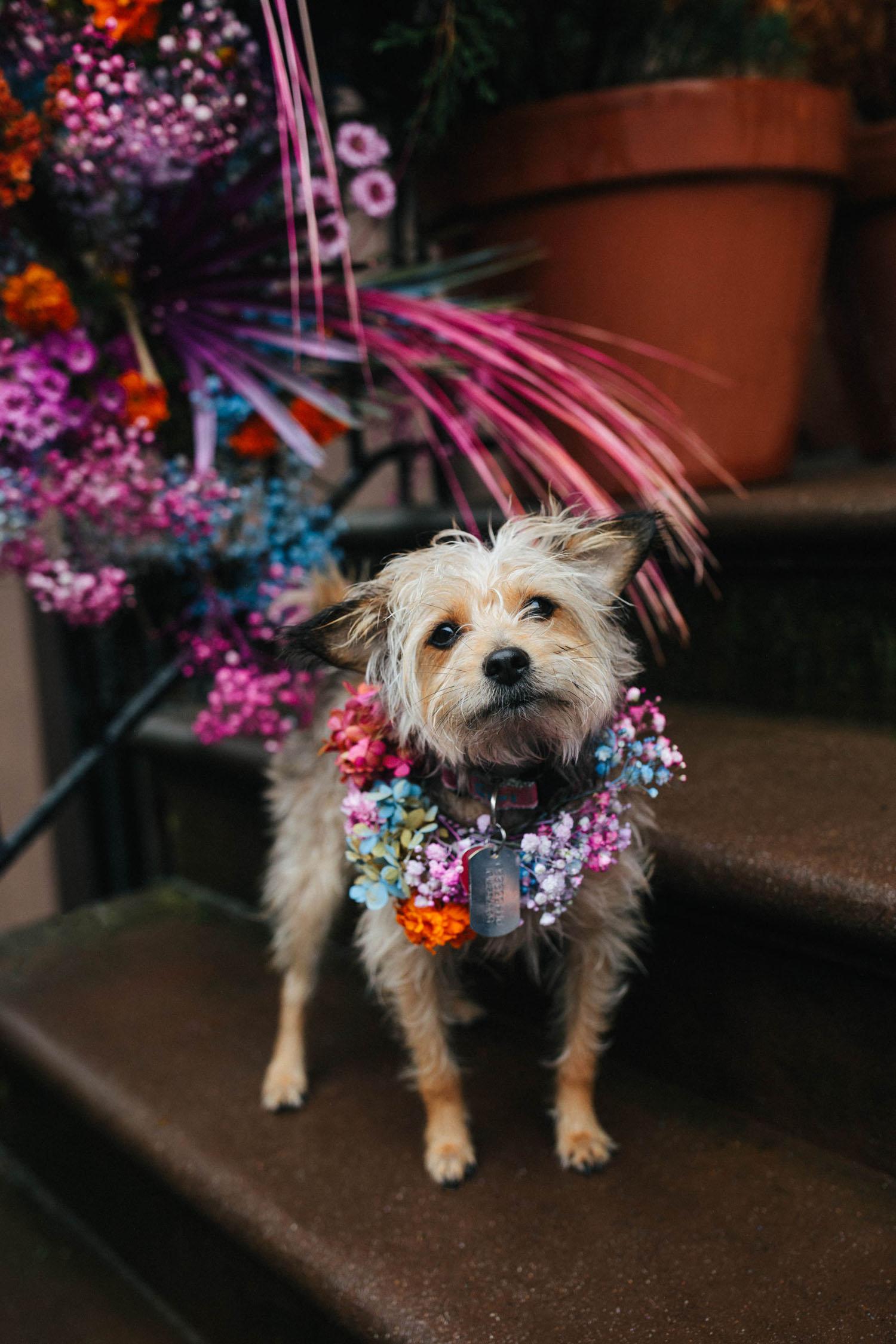 collier de chien pastel en fleurs
