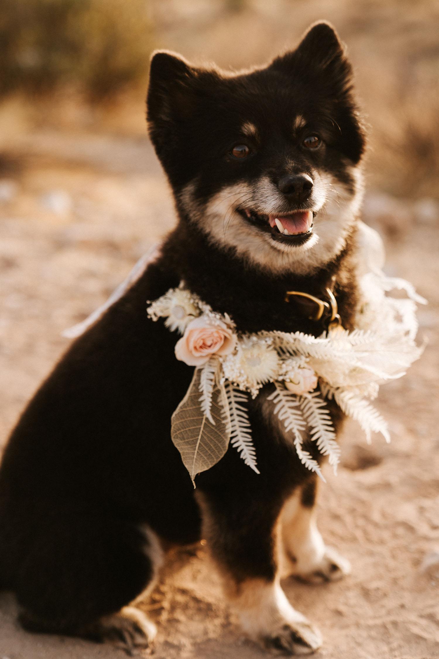 wedding pup floral collar