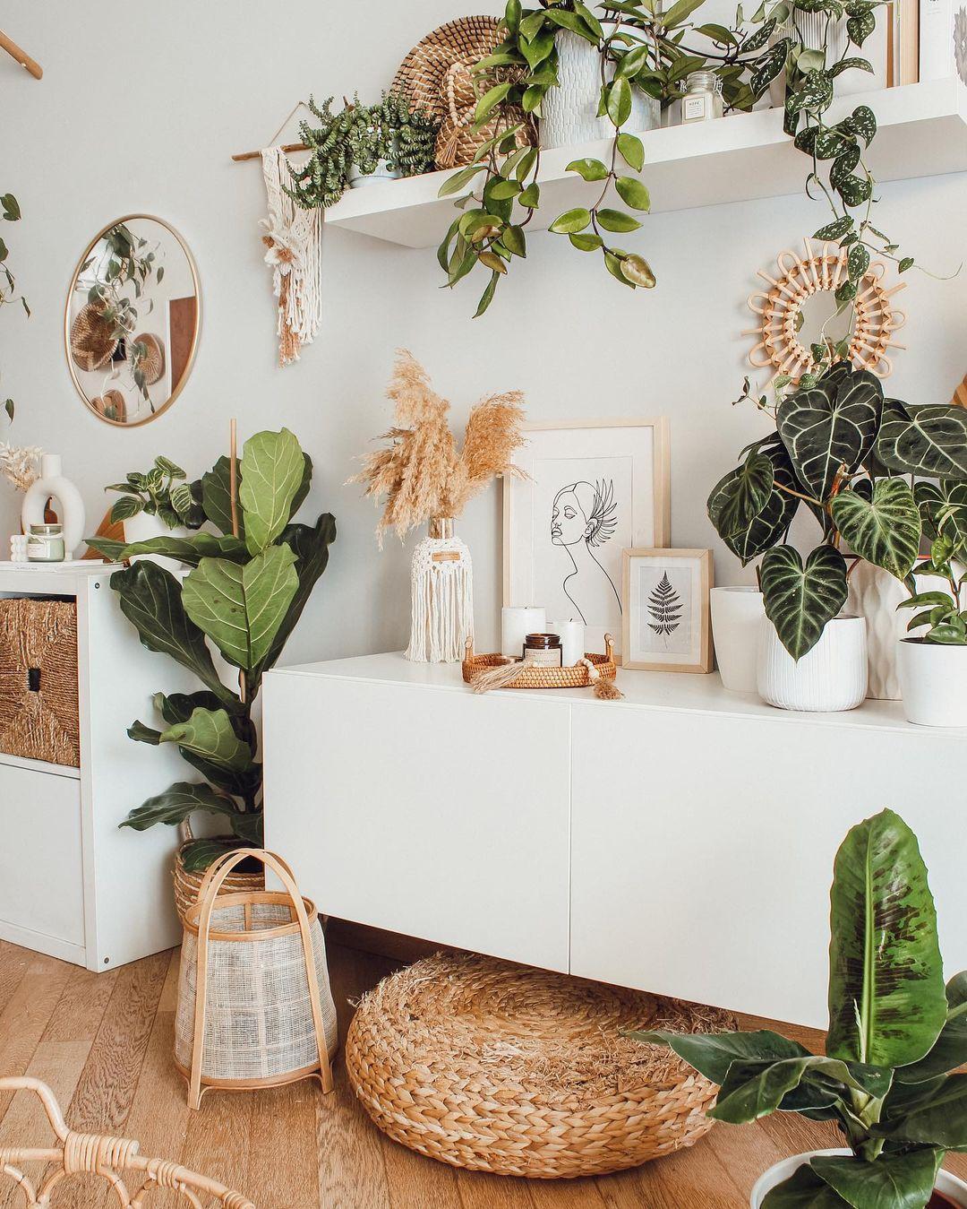 indoor plants boho home