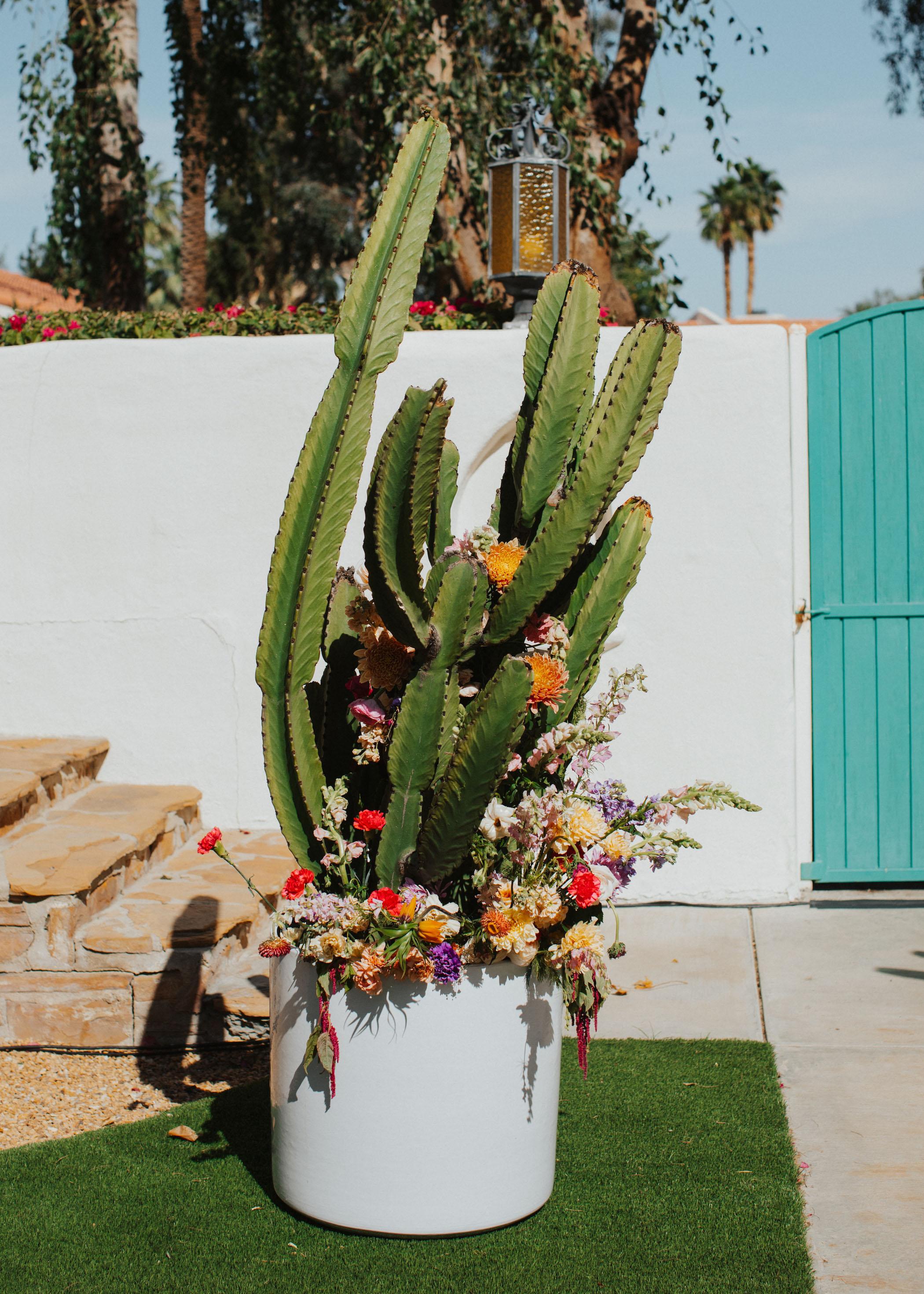 cactus-flower-plant