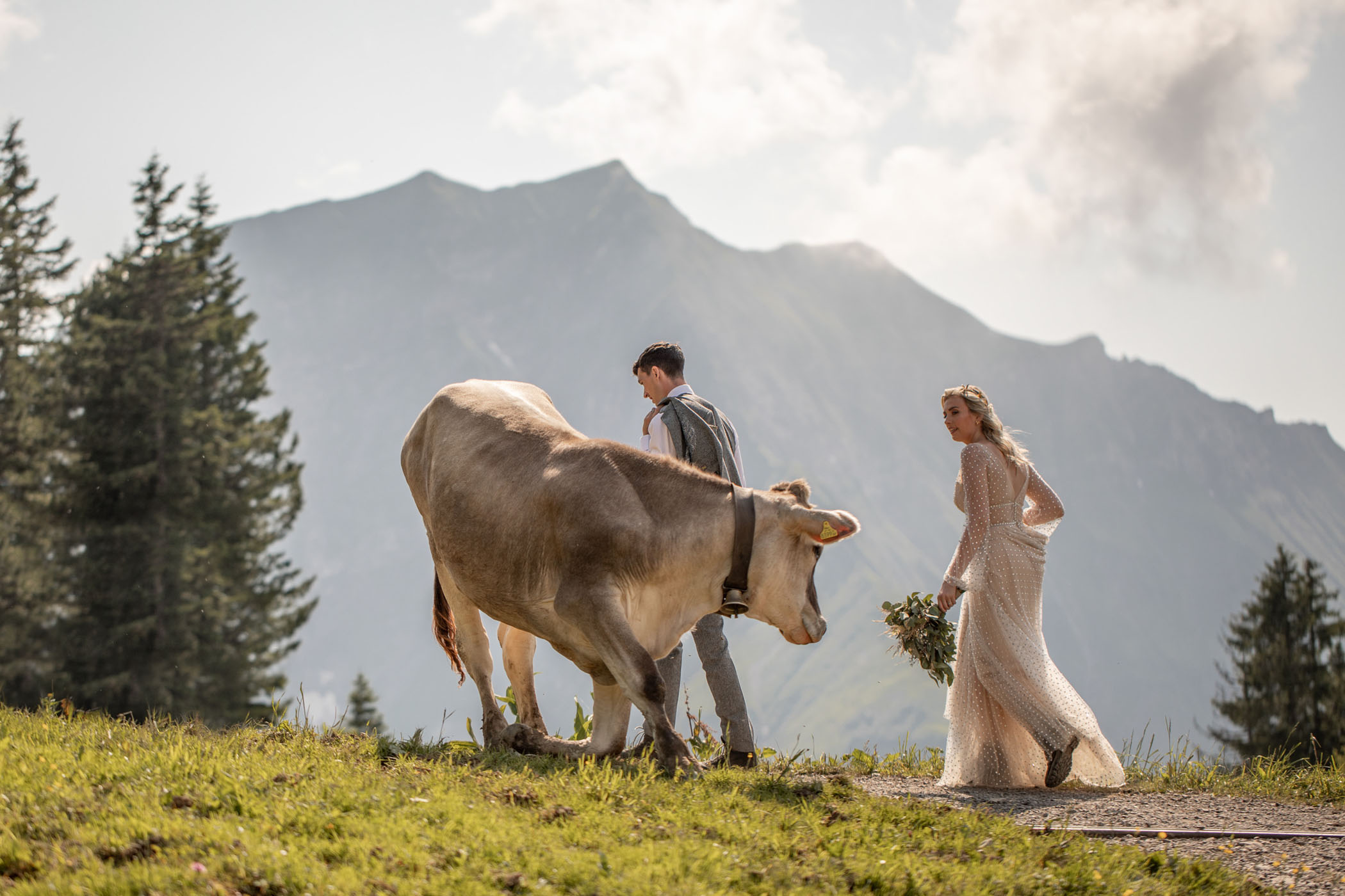 Cow greets bride and groom for their mountain elopement